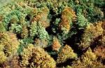bosque fuera